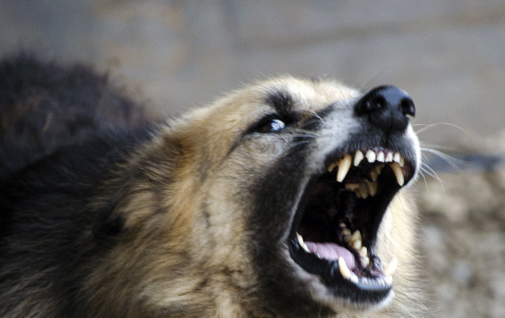 Ещё двух бешеных собак нашли в Тверской области