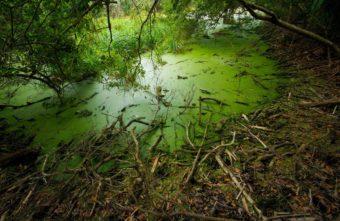 Житель Тверской области не смог выбраться из болота и утонул