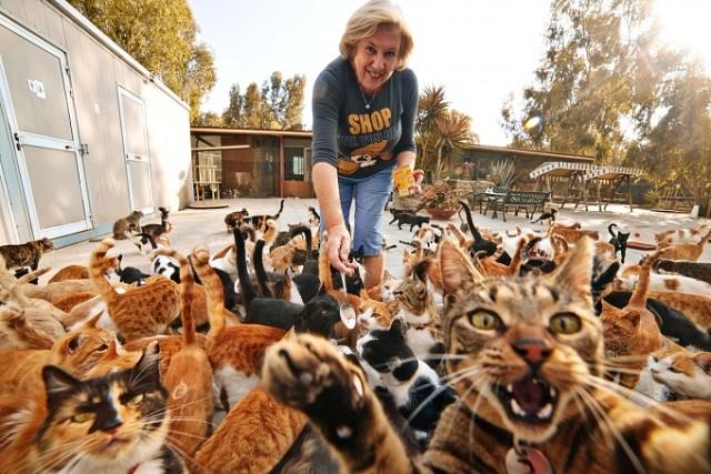 Жителей Тверской области могут штрафовать за грязную квартиру с кошками