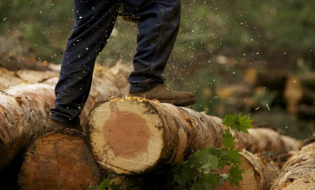 Житель Тверской области нарубил деревьев на 23 миллиона рублей
