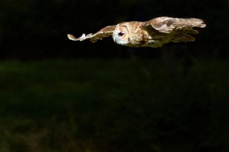 На ночь глядя в Тверской области выпустили на волю сов