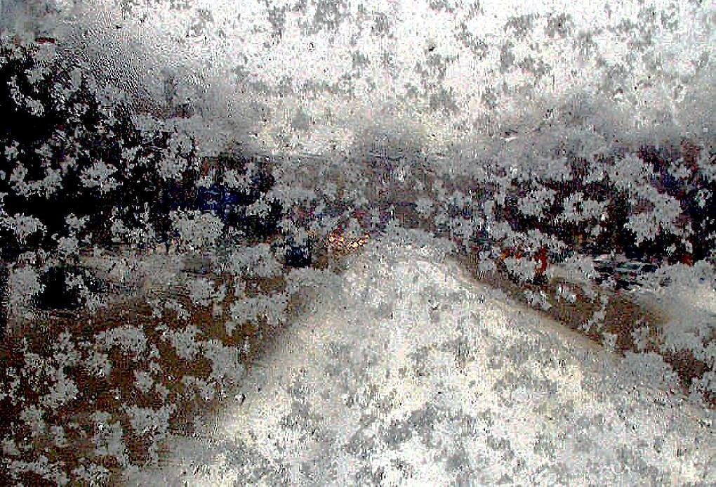 В ближайшие часы в Тверской области выпадет мокрый снег