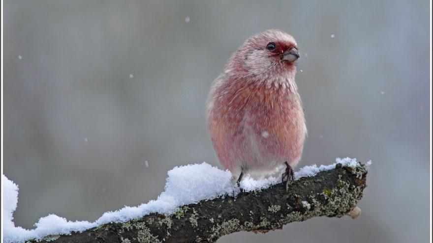 Синоптики пообещали жителям Тверской области, что зима будет