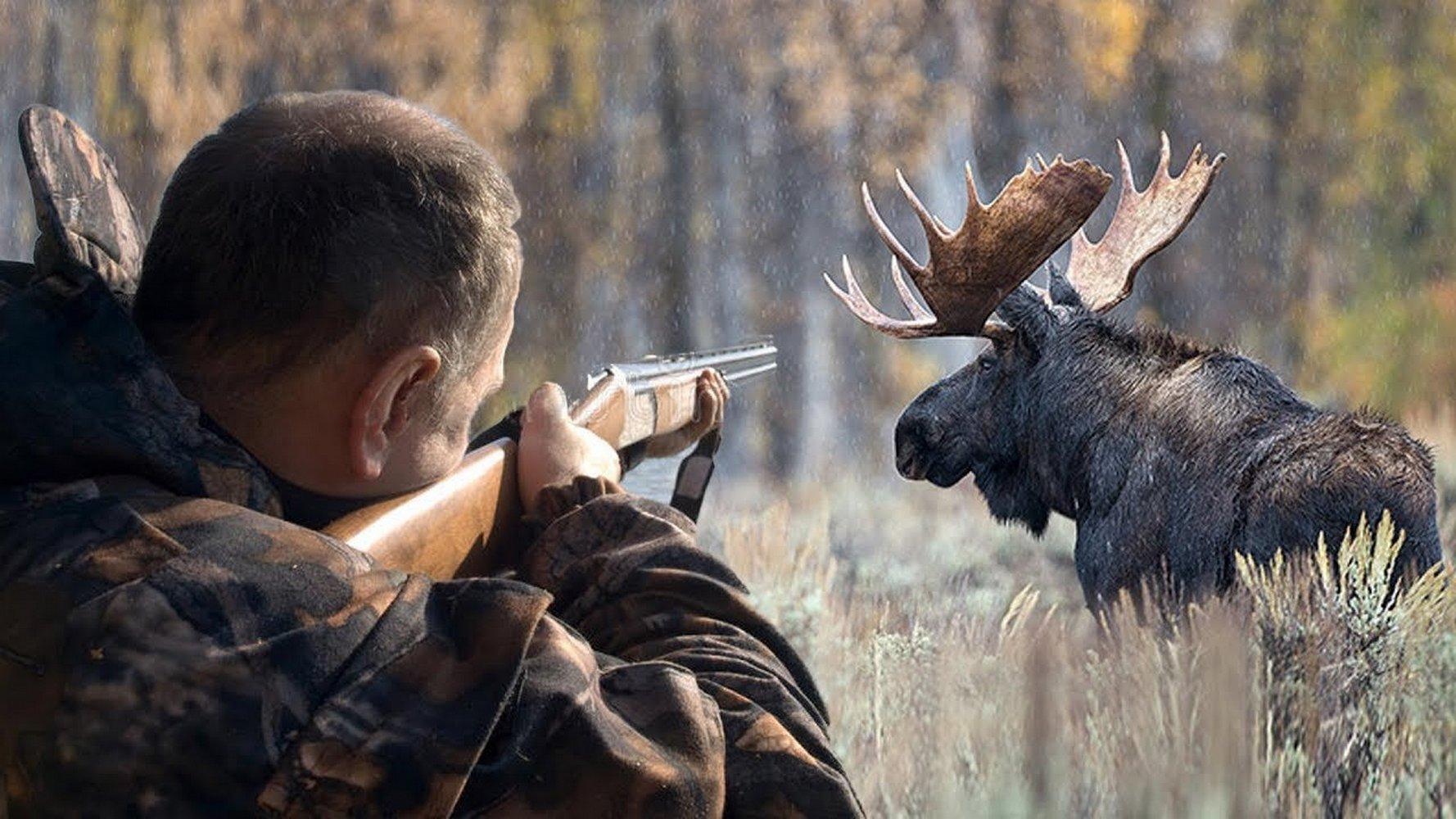 Пенсионер-браконьер застрелил лося в Тверской области
