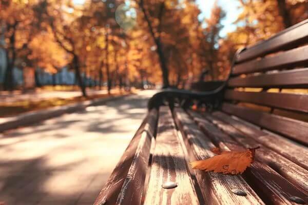 Тверские синоптики пообещали единственный день с дождем - выходной 4 ноября