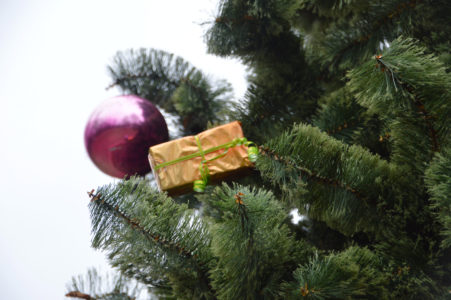 В Твери наряжают первую новогоднюю ёлку