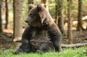 Тверские медвежата поделились секретами здорового сна