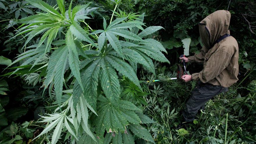 Жителю Тверской области удалось избежать тюрьмы за наркопреступление