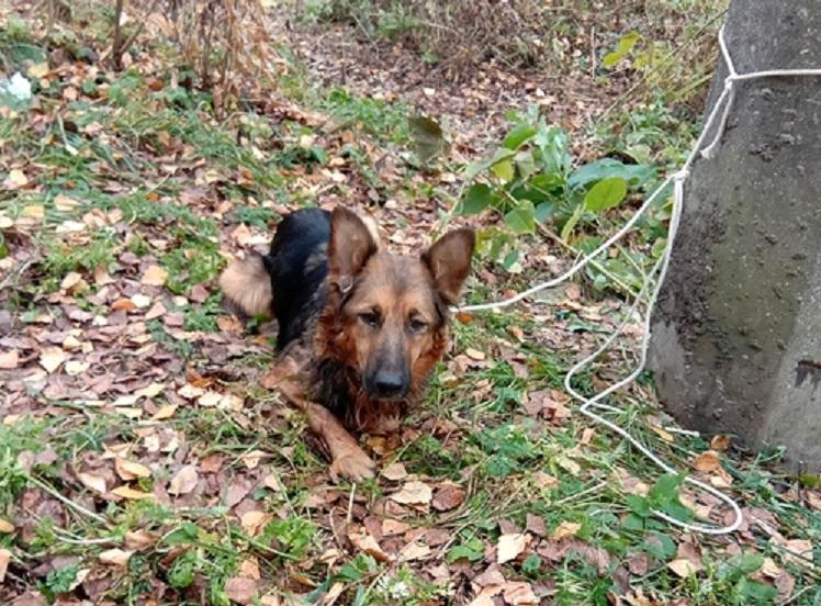 Живодёр привязал собаку к столбу и издевался над ней в Тверской области