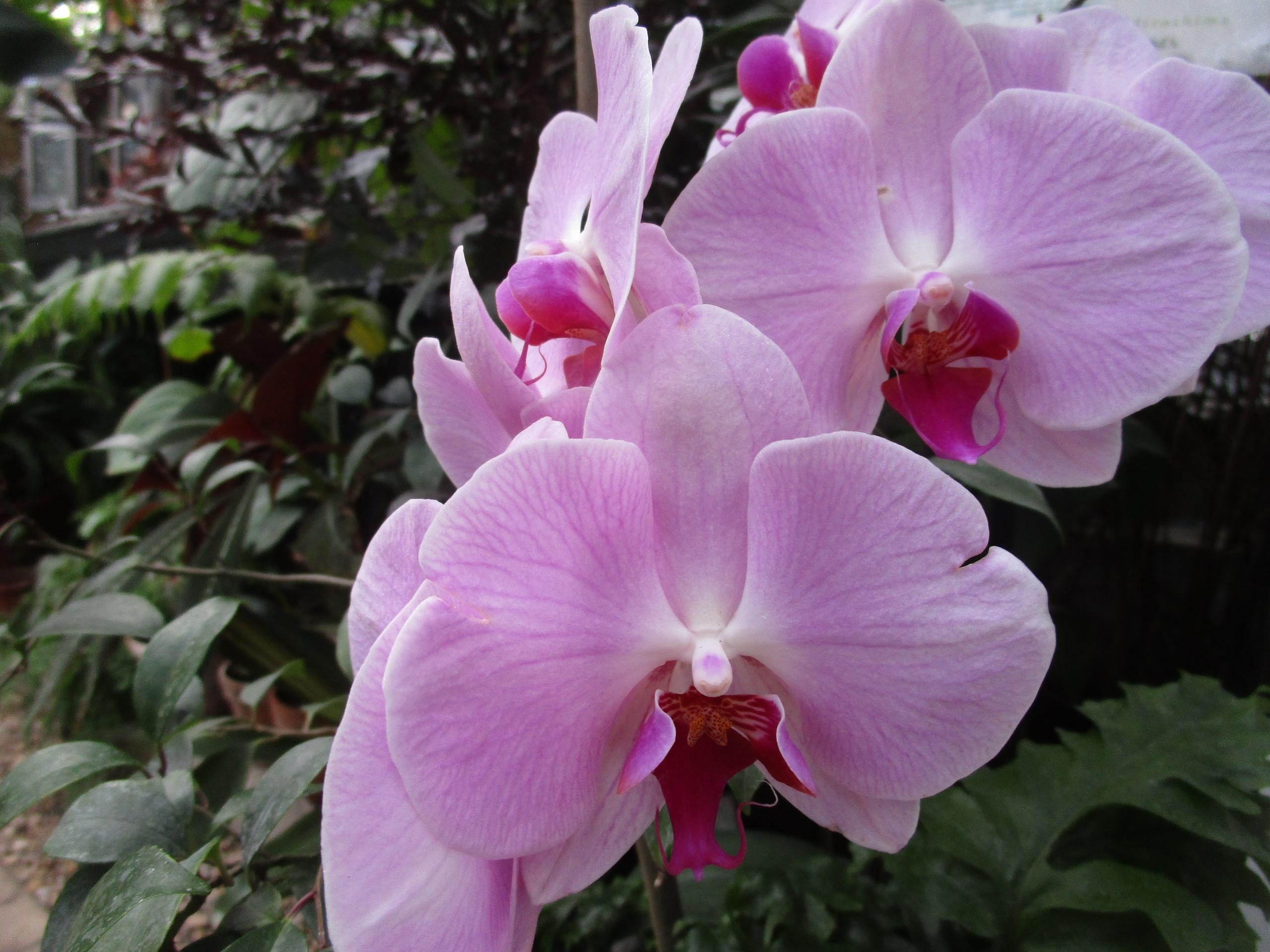 Осенью в Твери расцвело целое созвездие красивейших орхидей