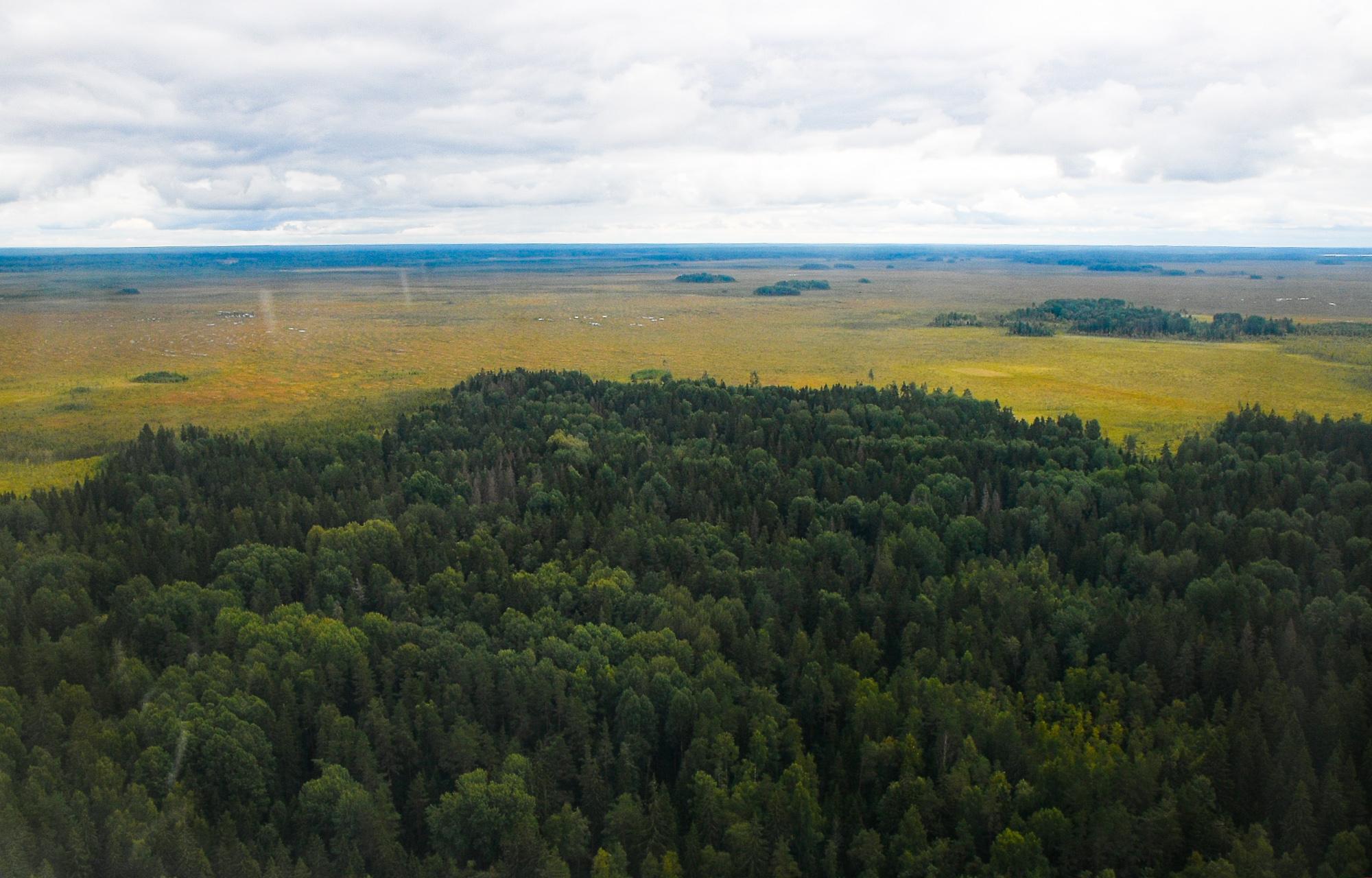 На 2 тысячи гектаров увеличится лесной фонд Тверской области