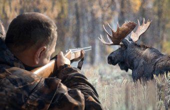 Жителя Тверской области будут судить за один выстрел в лося