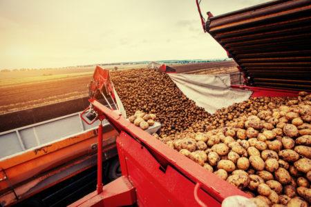 Почти 200 тысяч тонн картофеля накопали в Тверской области