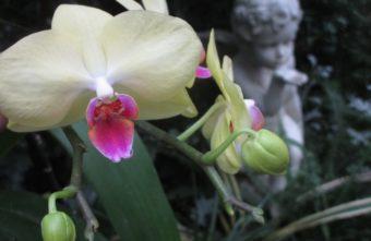 Цветение «ночных бабочек» в Твери не прекращается никогда