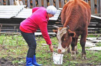 144 жителям Тверской области помогли перейти на самообеспечение