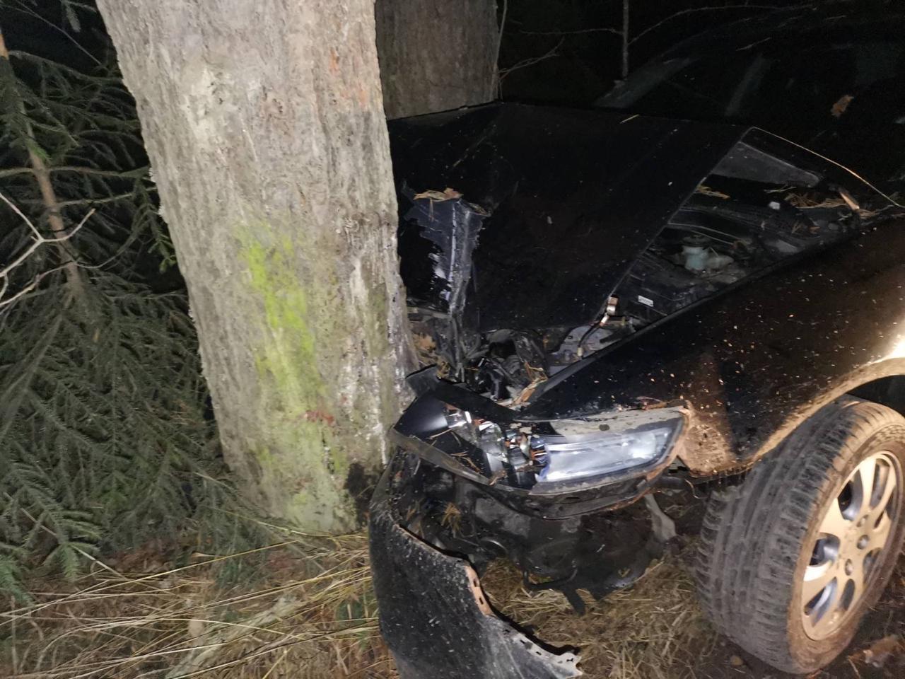 На трассе в Тверской области ещё один водитель «не заметил» дерево