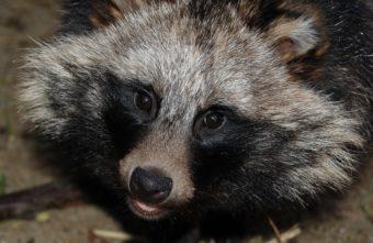 Тверские биологи возмущены отношением людей к животным