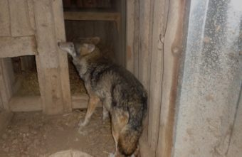 В Тверской области волки и аисты готовятся к зимовке
