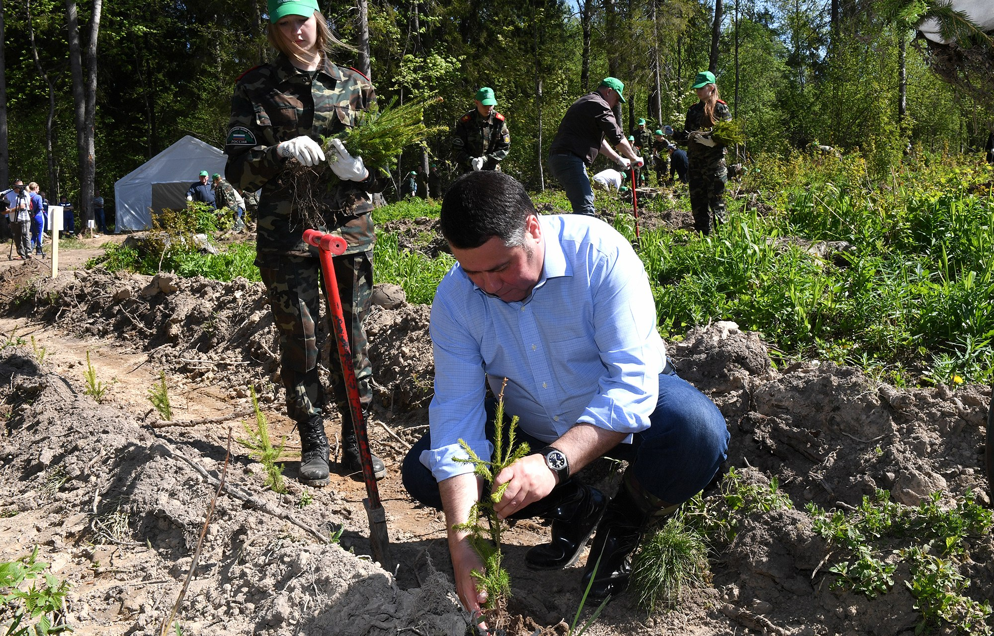 Тверская область входит в тройку лидеров России по посадкам леса