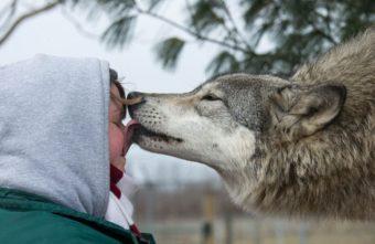 """Тверские биологи рассказали, нужно ли учить животных """"ненавидеть"""" людей"""