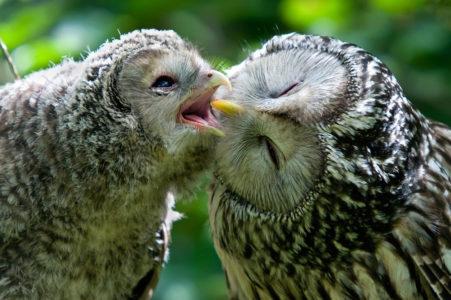Тверские биологи рассказали, как отличить птенцов от взрослых птиц