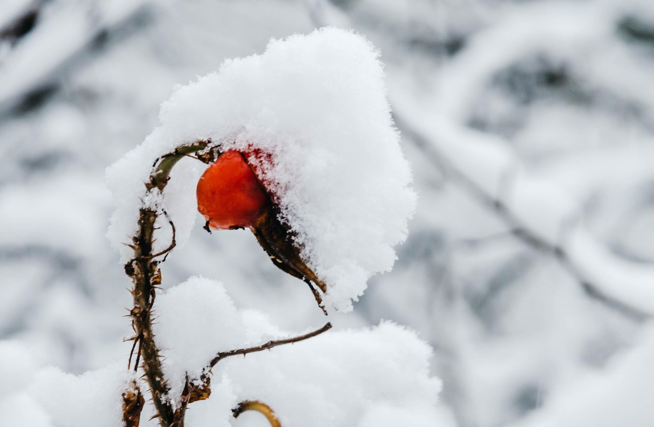 Жители Тверской области ждут снег, а приходят морозы