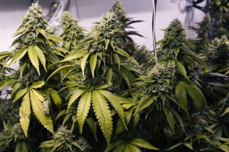 Стеклянную банку с марихуаной нашли в тумбочке у жителя Тверской области