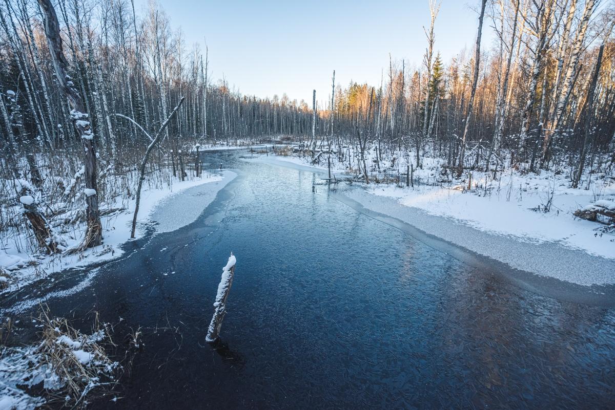 В тверских соцсетях поделились замечательными снимками заповедного болота