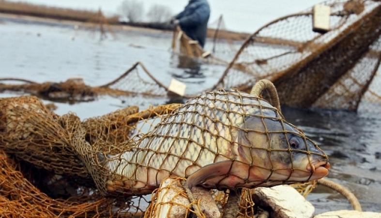 Браконьера, раскинувшего сети на озере в Тверской области, ждёт суд