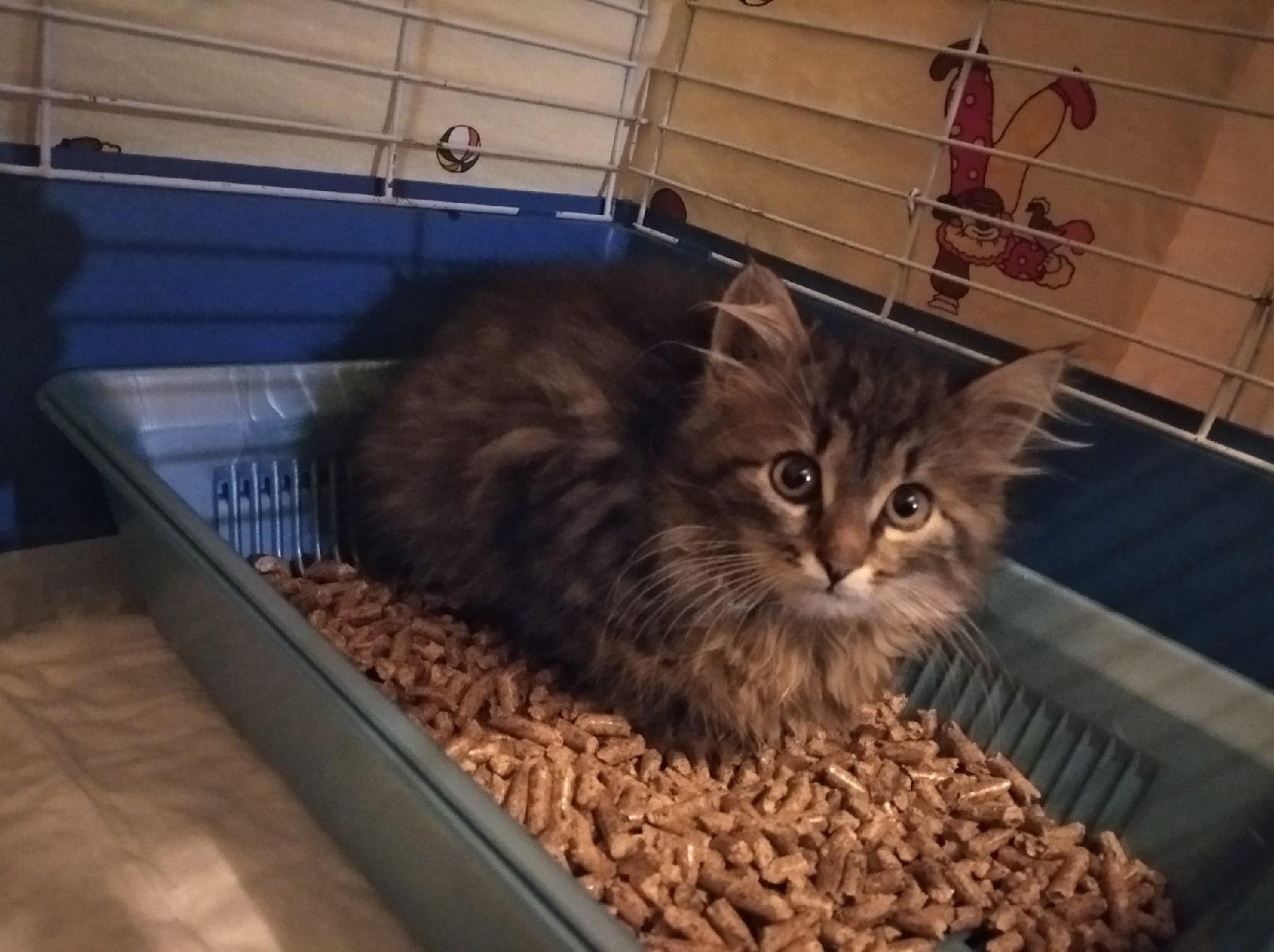 В Твери спасли котят, которых могли закопать на теплотрассе