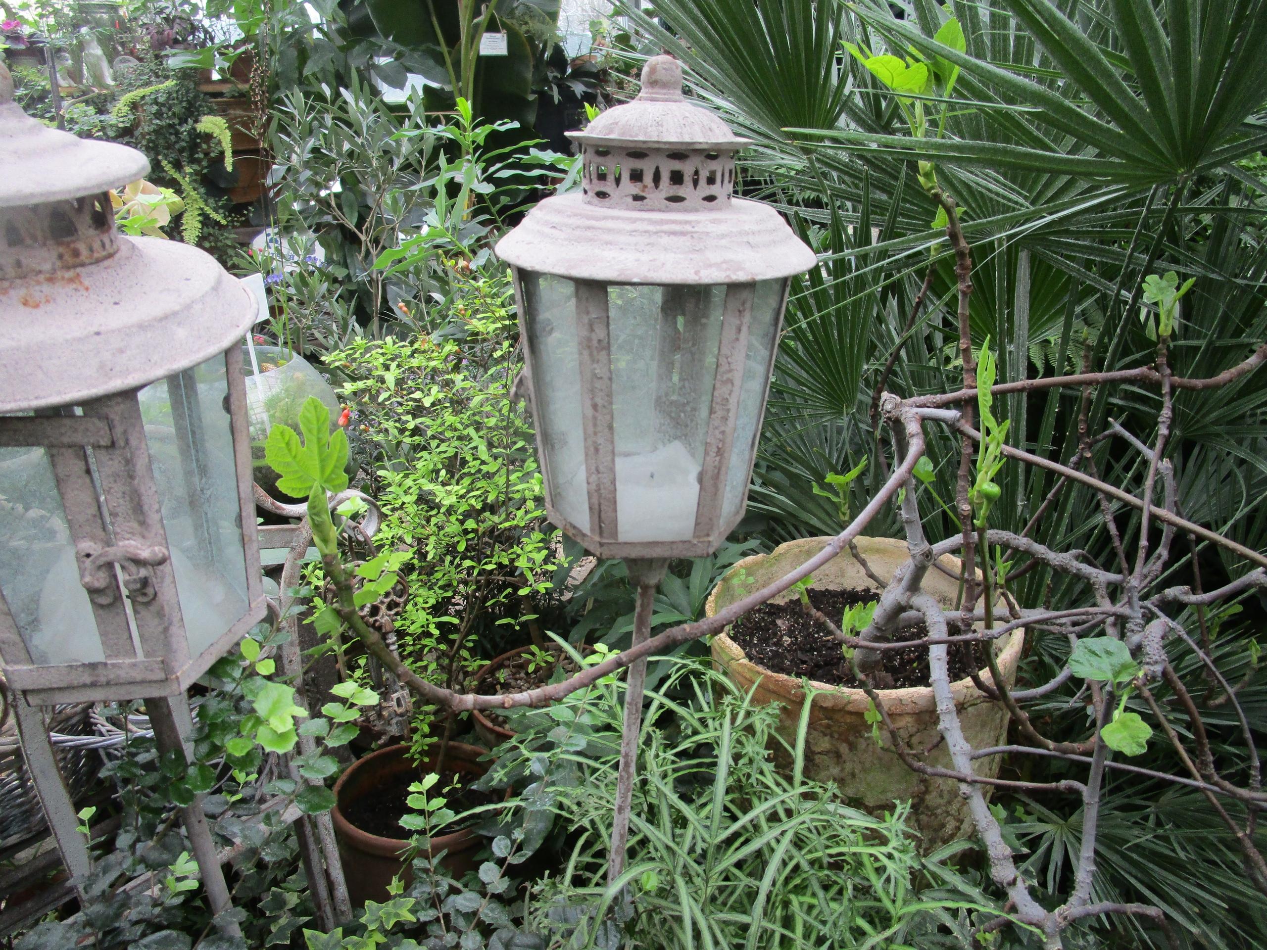 Сочная фига: в Твери в январе ждут плодоношения инжира