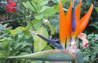 """В тверском Ботаническом саду можно увидеть """"райских птиц"""""""
