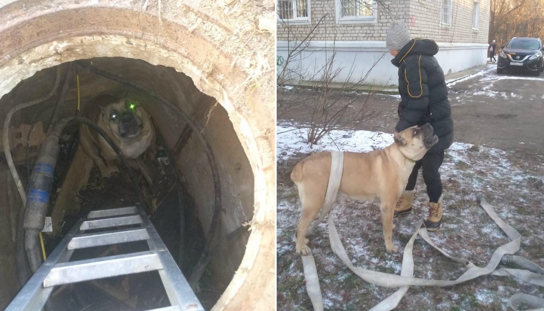 В Тверской области спасли жизнь собаке, упавшей в открытый коллектор