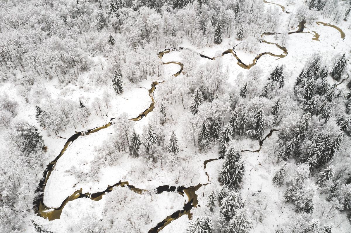 По заповеднику в Тверской области течет черно-коричневая вода