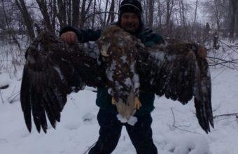 Краснокнижный орлан-белохвост погиб в Тверской области