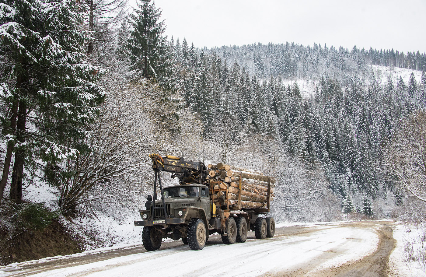 Двое жителей Тверской области «заработали» миллионы на незаконной древесине