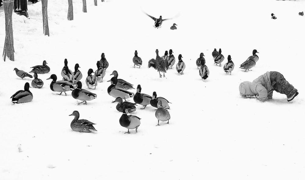 В Тверской области пересчитают птиц