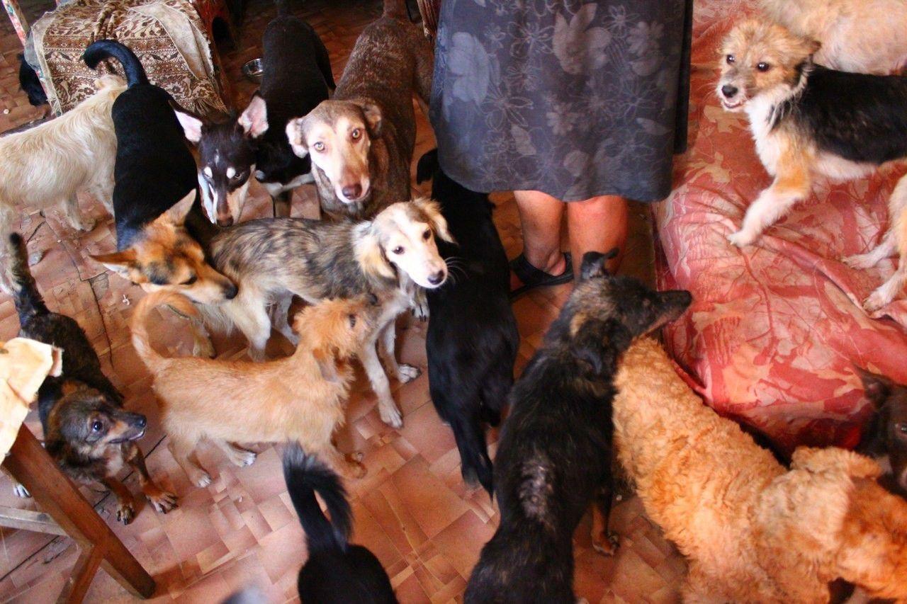 В Тверской области из взломанной квартиры не пропало ничего, кроме 10 собак