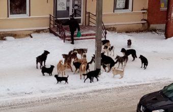 В Тверской области собачья свора не дает людям выйти из магазина