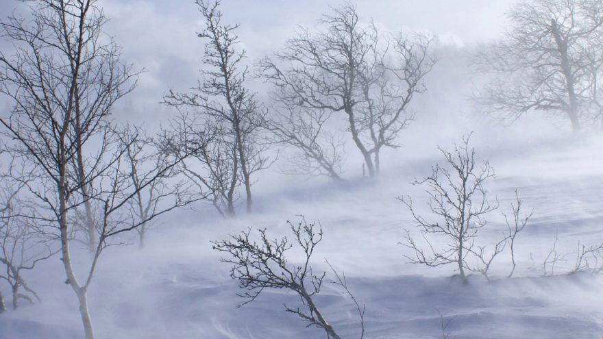 МЧС предупреждает: сильный ветер подует в Тверской области