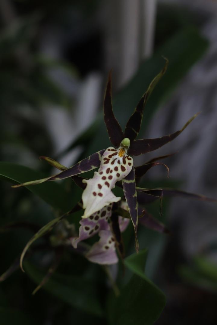 Зимой в Твери расцвели пауки