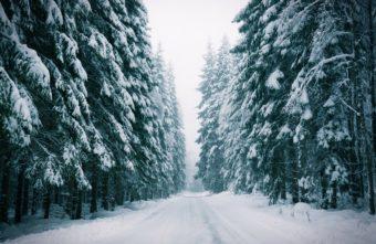На 22 гектара увеличится лесной фонд Тверской области