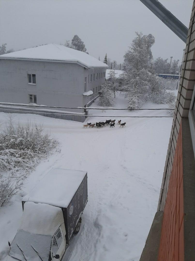 Стаи собак держат в страхе жителей Тверской области