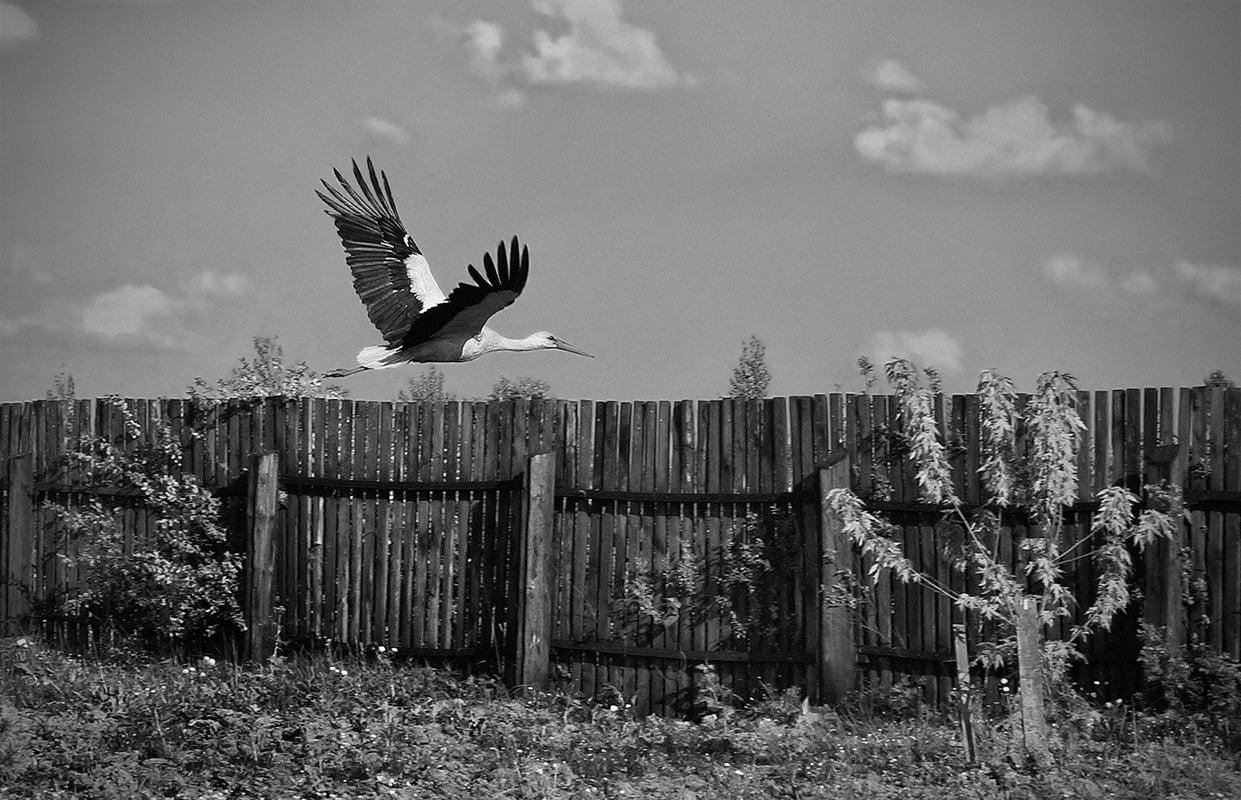 Тверской фотограф вошел в число лучших участников международного конкурса