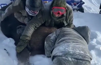 Охотники загнали и задушили беременную лосиху в Тверской области