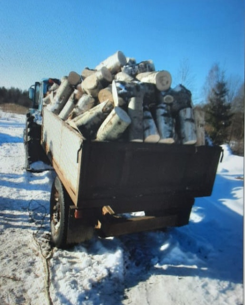 Житель Тверской области увез на тракторе березы и осины