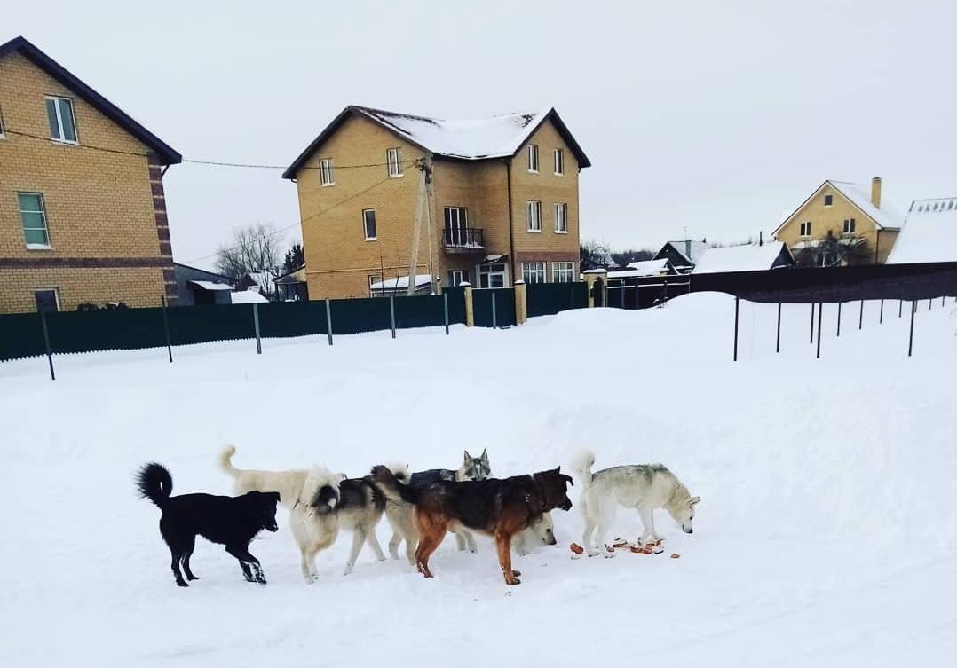 В правительстве отреагировали на жалобы на собак, которые держат в страхе деревню под Тверью