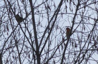 В Тверской области объявились «невидимые» птицы