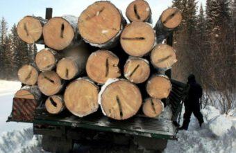 На 55 миллионов нарубила ценной древесины банда в Тверской области