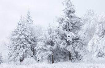 Сильные морозы ударят по Тверской области с понедельника